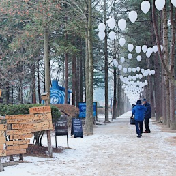 Photo taken at Nami Island.